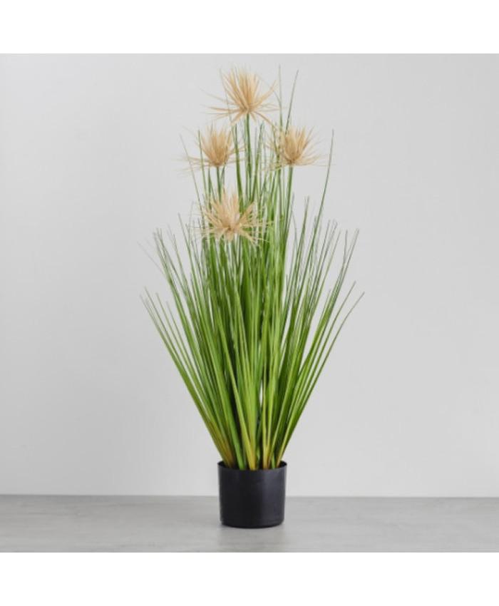 compozitie florala ARALIA