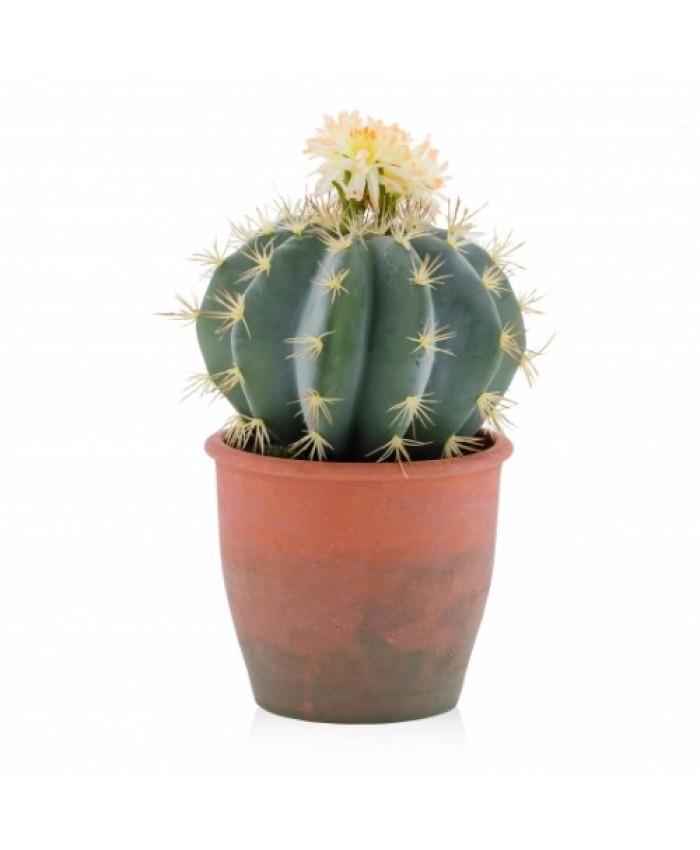 compozitie florala CACTUS